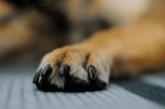 מוגן: תרפיה בעזרת כלבים ללוחמים הסובלים מהלם קרב