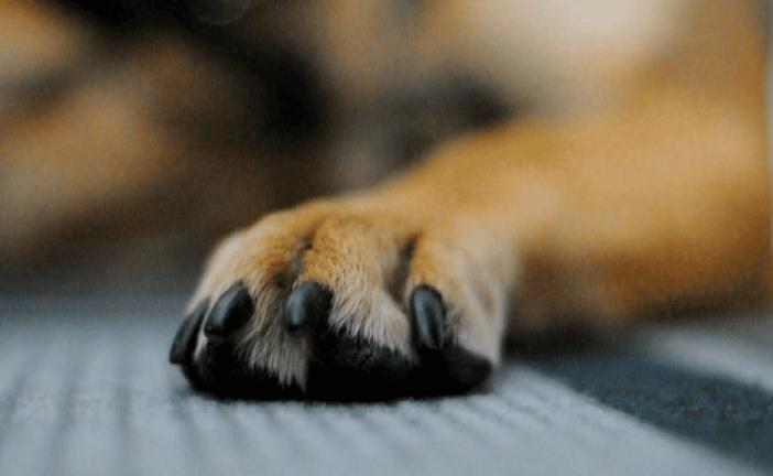 איך לקצוץ ציפורניים לכלבך?