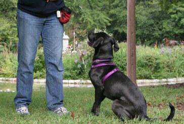 מוטיבציה באילוף כלבים – התיאוריה מאחורי
