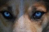 פילוסופית אילוף כלבים