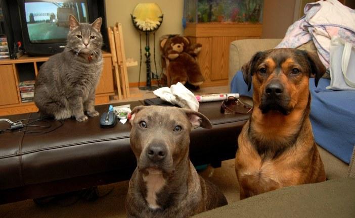כלב וחתול ביחד: איך לעשות היכרות נכונה ובטוחה
