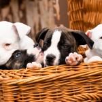 עשיית צרכים מחוץ לבית – איך לאלף כלב או גור?