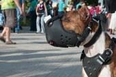 איך לבחור זמם לכלב שלך