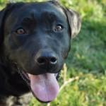 אוקסיטוסין: צריך חיזוק? פשוט הסתכל לכלב בעיניים