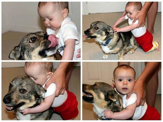 כלבים ותינוקות 2