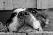 סירוס כלב –  כדאי או לא כדאי?