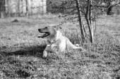 איך לא לאלף כלבים – אילוף כלבים של פעם