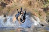 צפו בקאירו: כלב לחימה שתפס את בן לאדן