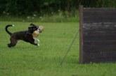 מונדיורינג – Mondioring – ספורט כלבים