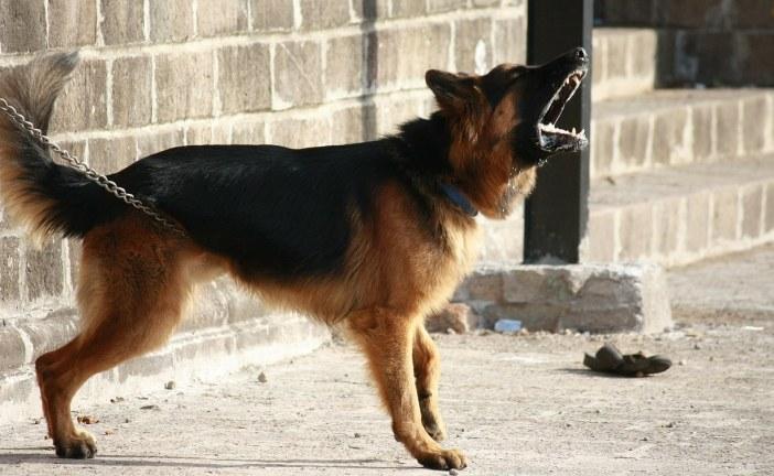 כלב אגרסיבי: האבולוציה של אילוף בעזרת קולרים חשמליים
