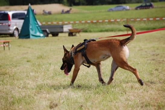 כלבי חילוץ והצלה דרך העיניים של פנסיונר