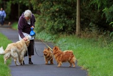 כלבים עוזרים לשיפור איכות החיים אצל קשישים