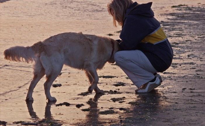 ילדים אוטיסטים עוזרים לאמן כלבי סיוע