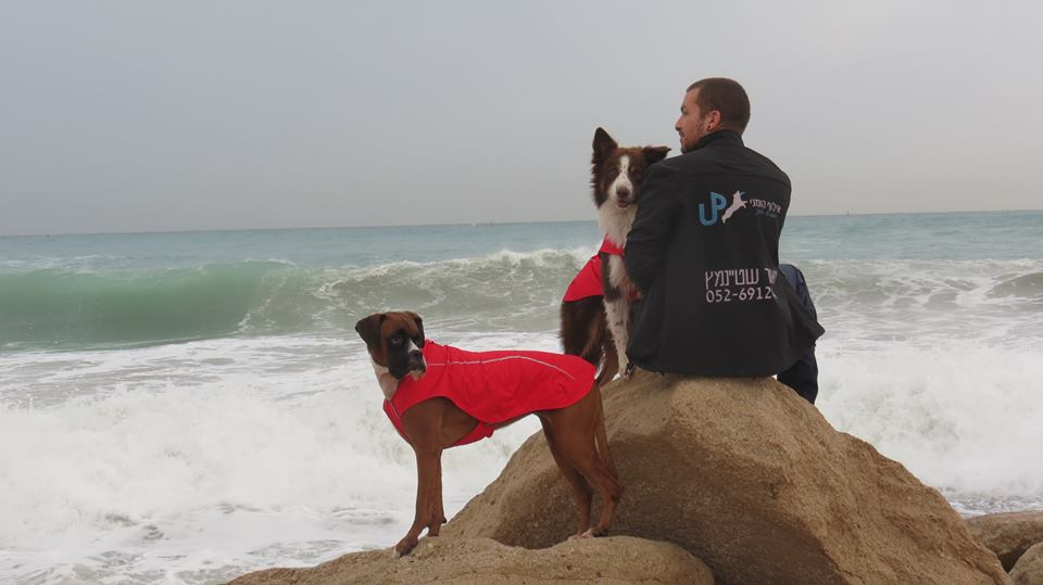 מאור שטיימינץ עם שני הכלבים שלו - בוקסרית ולאו הבורדר ליד הים.