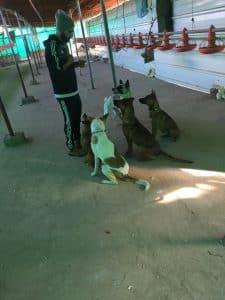 מתן קמר בוגר מחזור כלבנות 2015 מצולם במבנה של כלביית נבטים כאשר אוכל בידיו וארבעה כלבים יושבים ומביטים בו.