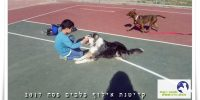 קייטנת אילוף כלבים בבית עזרא ילד משחק עם כלב