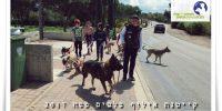קייטנת אילוף כלבים בבית עזרא ילדים מטיילים במושב עם כלבים