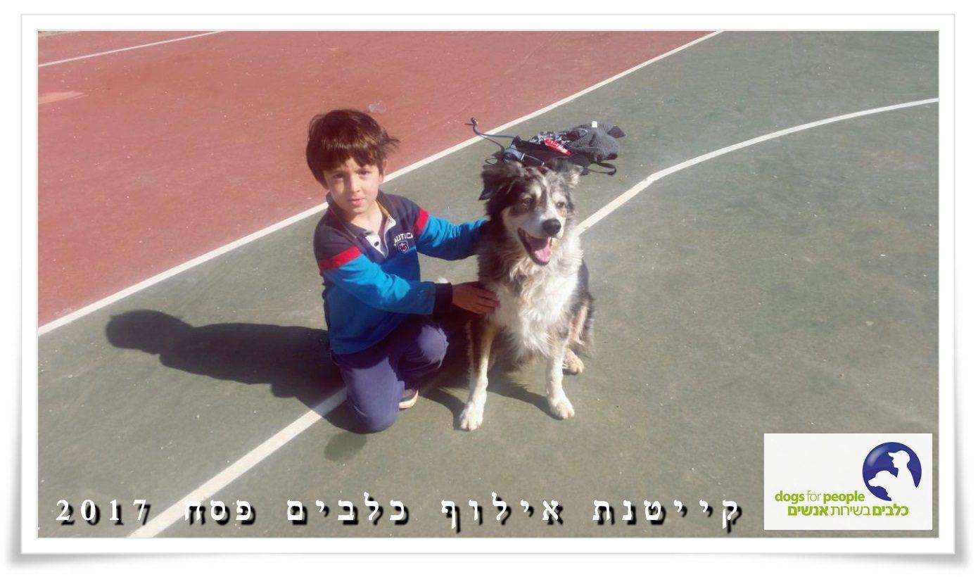 ישי הילד ומייק הבורדר בקייטנת אילוף כלבים בבית עזרא