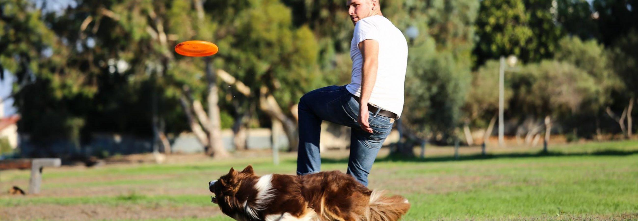 מאור שטיימינץ מאלף כלבים משחק פריזבי עם כלבו לאו.