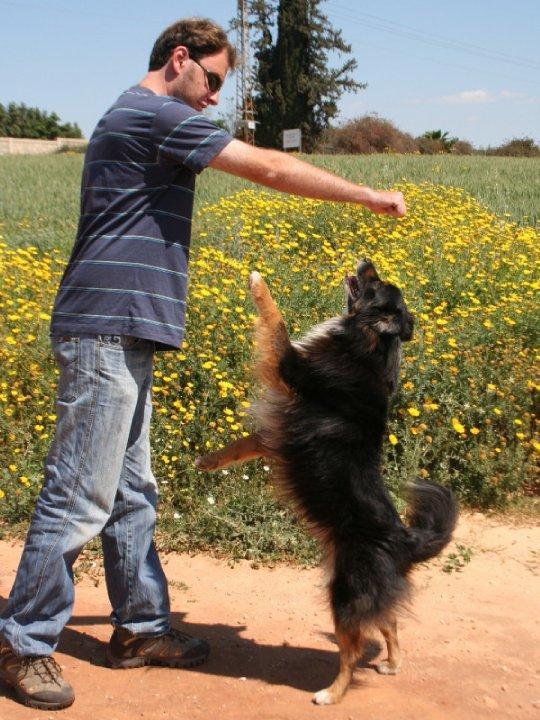 ולאד דמרצב מרצה ומאלף כלבים עם כלבו צומי רועה אוסטרלי