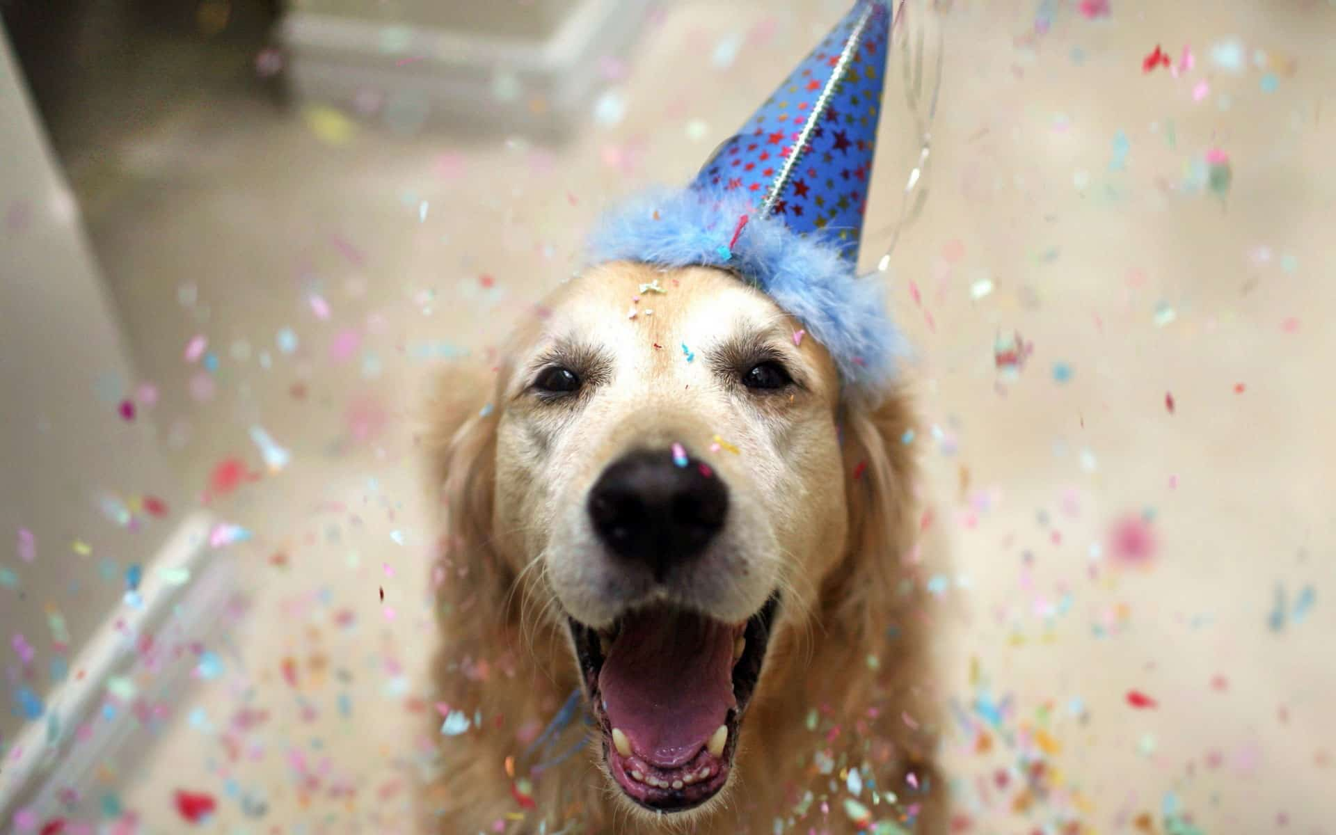 כלב יום הולדת