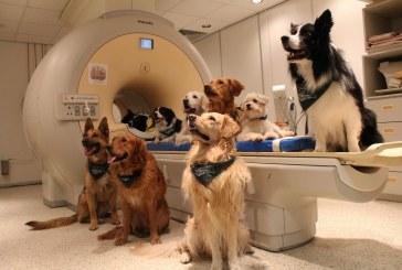 """מחקר: כלבים מבינים גם אוצר מלים וגם """"אינטונציה"""" גוון קול של בני אדם"""