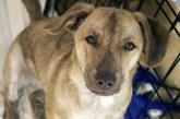 אסירים בטקסס מעניקים לכלבים הזדמנות שניה בחיים