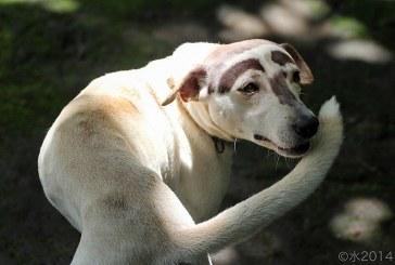 גנים האחראיים להתנהגות אובססיבית קומפולסיבית נמצאו אצל כלבים
