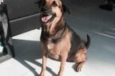כלב יוצא דופן בסינגפור אומן לזהות רמות סכור ולהתריע את בעליו הסוכרתי