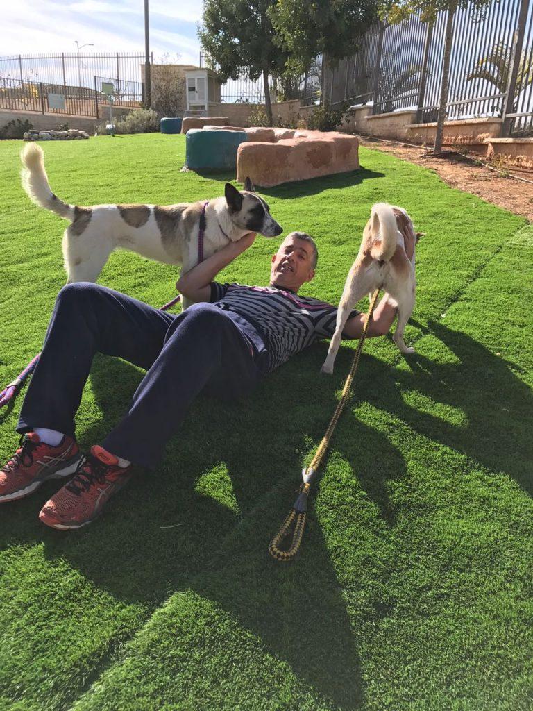 דוביא לביא בוגר מחזור כלבנות טיפולית 2015 שוכב על הדשא עם שתי כלבות כנעניות.