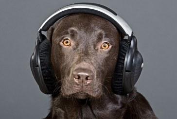 מחקר חדש – כלבים אוהבים מוסיקת רגאיי